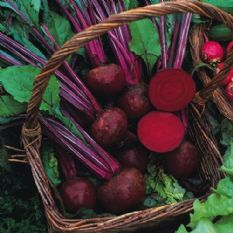 Beetroot Boltardy Seeds 100 grams - 1kg - Bulk Discounts available